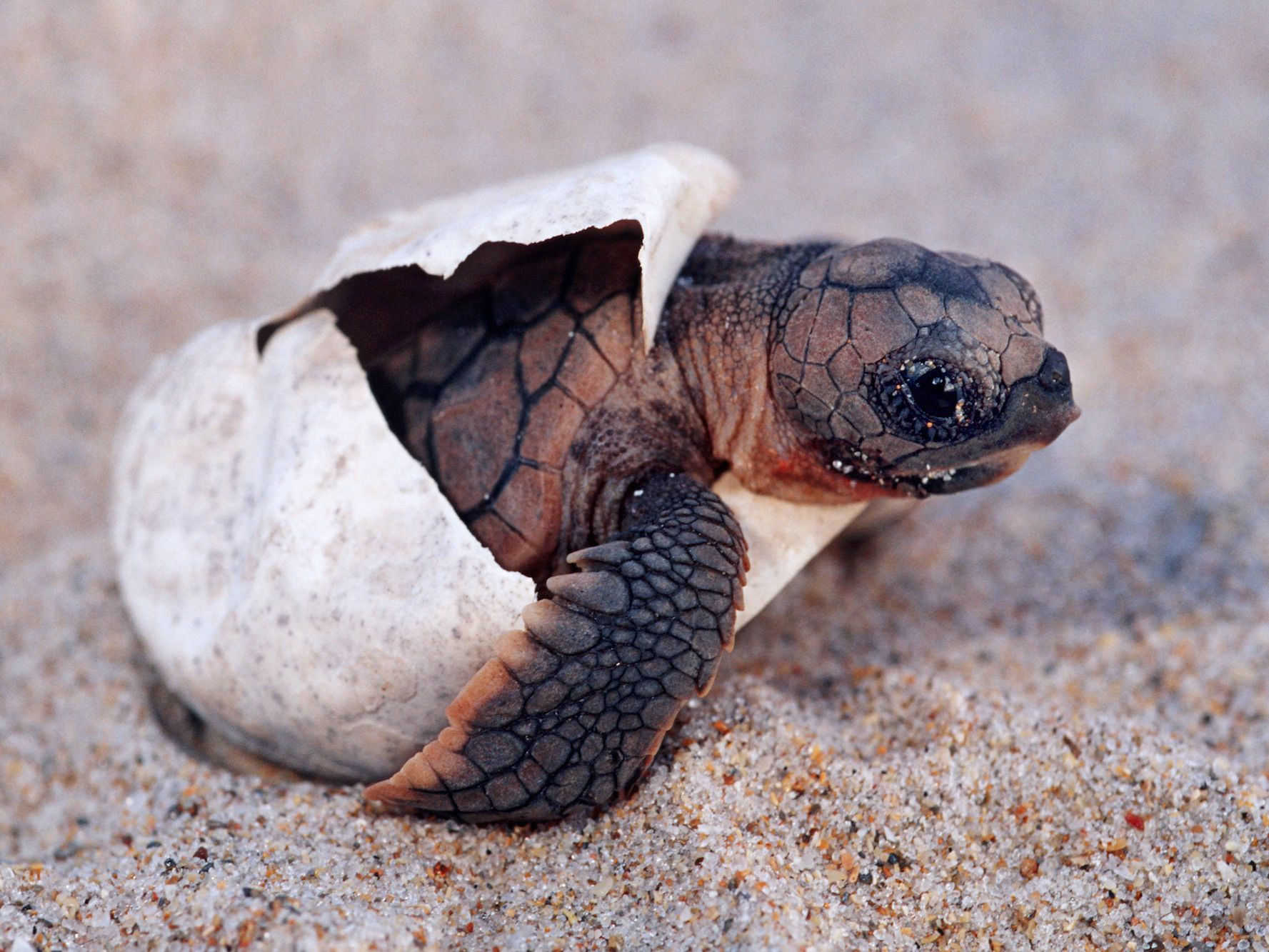 The Illegal Sale Of Turtle Hatchlings In The Us