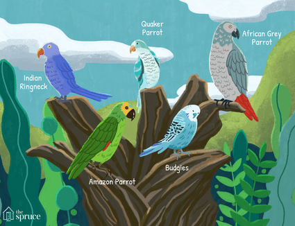 talking bird species illustration