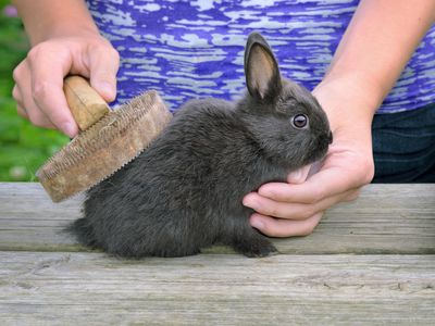Why You Have To Brush Your Bunny