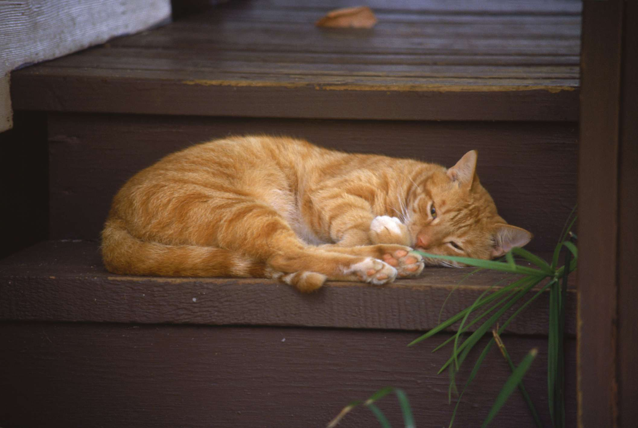 Cat sleeping on stairs, HI
