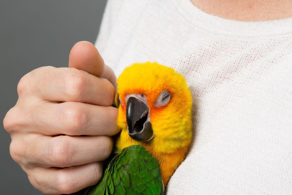Tropical Bird snuggling in Woman's Shirt