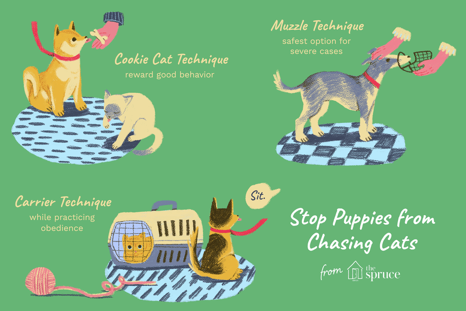 How to stop dogs and puppies from chasing cats