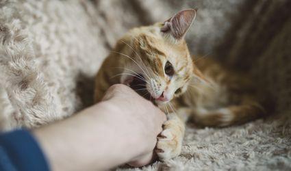 cat biting owner