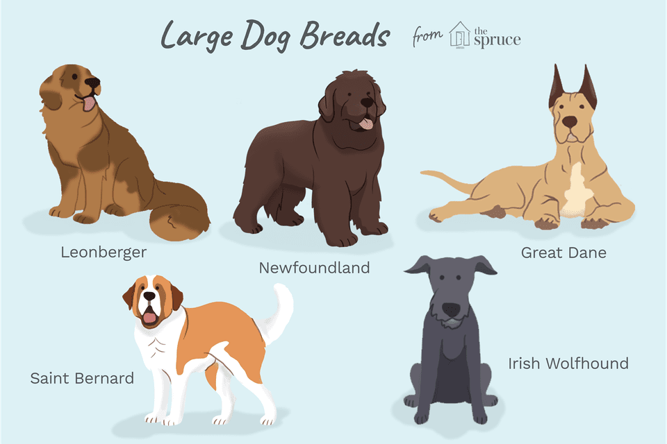 illustration of large dog breeds