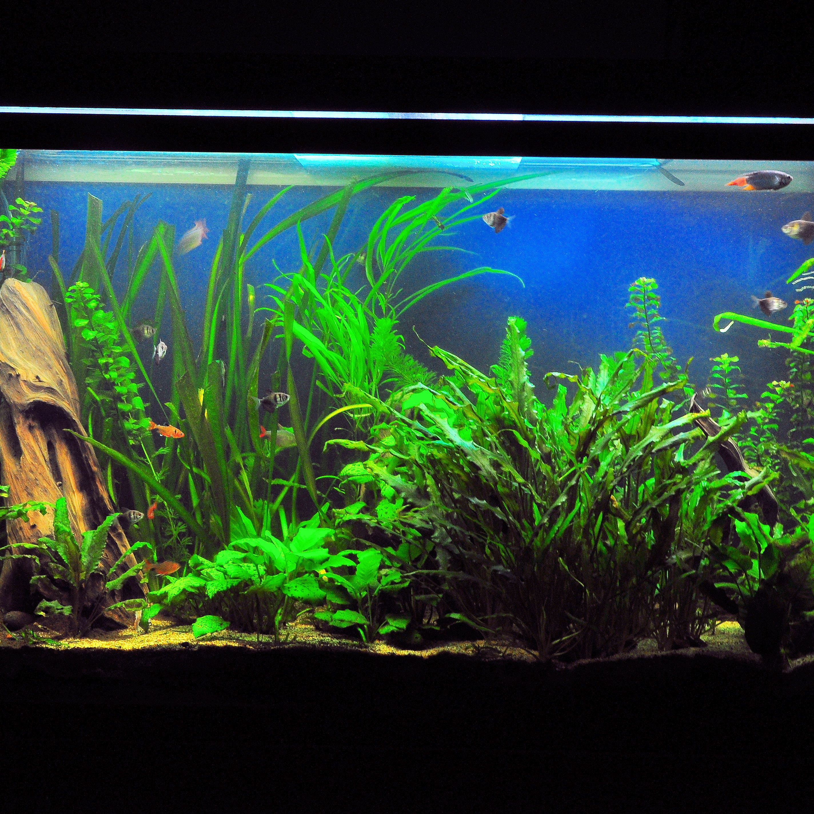 Preferred Tank Levels For Community Fish Species