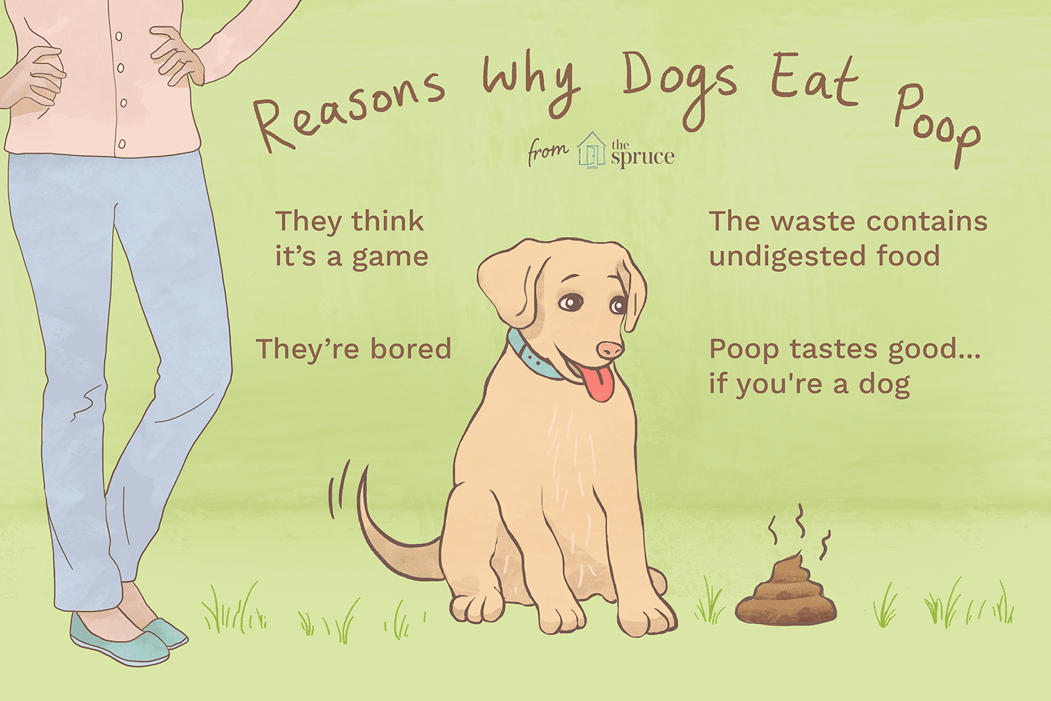 Illustrated list of reasons why dogs eat poop.
