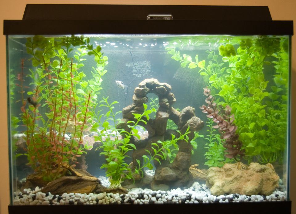 Fish tank with artificial plants and several fish.