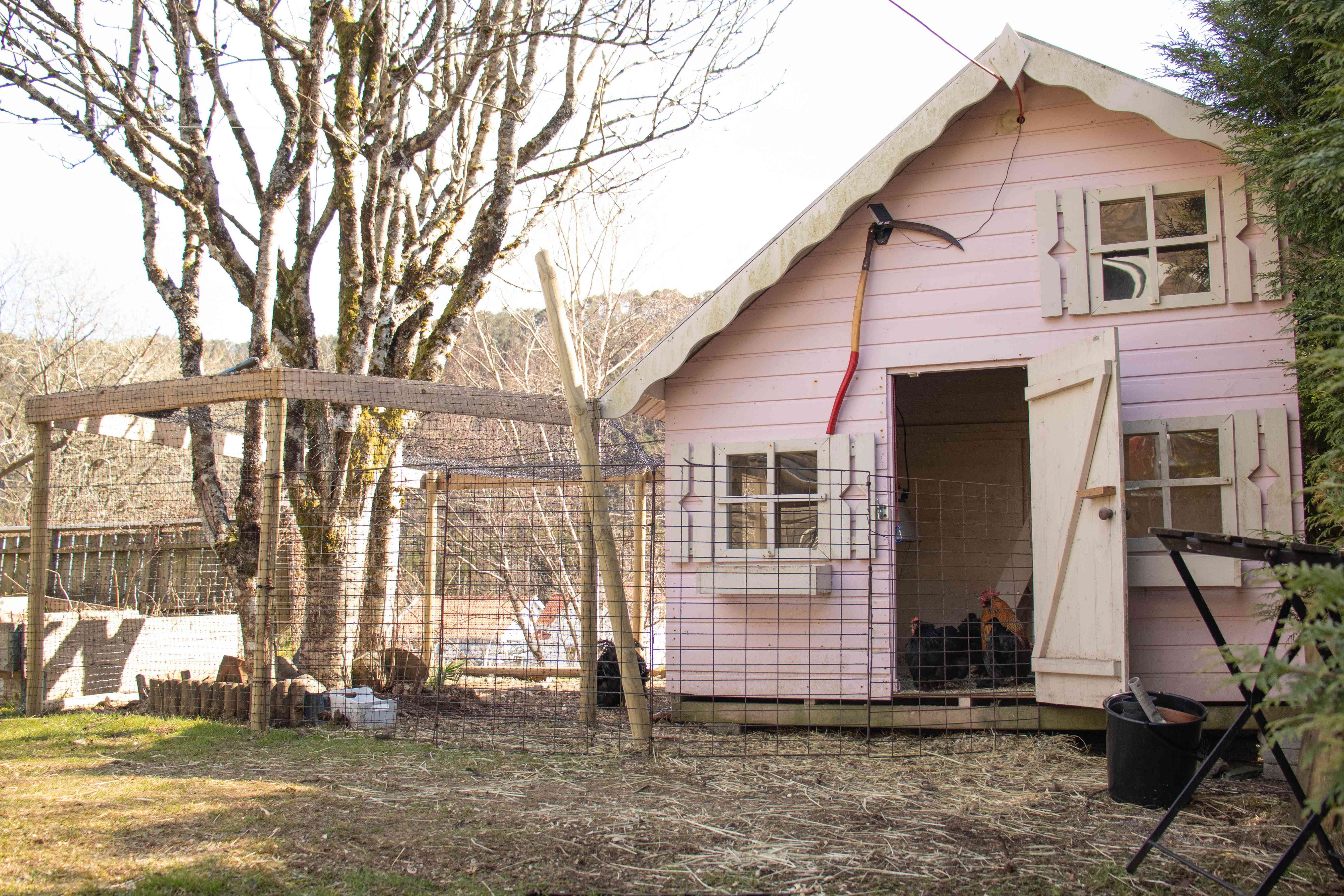 Chicken wire surrounding pink chicken coop for pet chicken protection