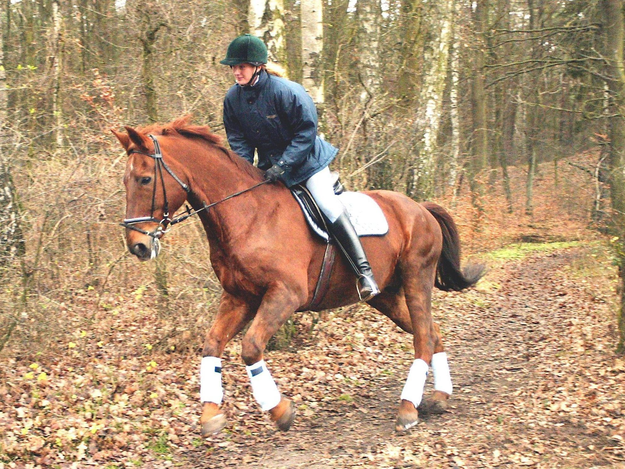 Learn To Canter Or Lope Your Horse