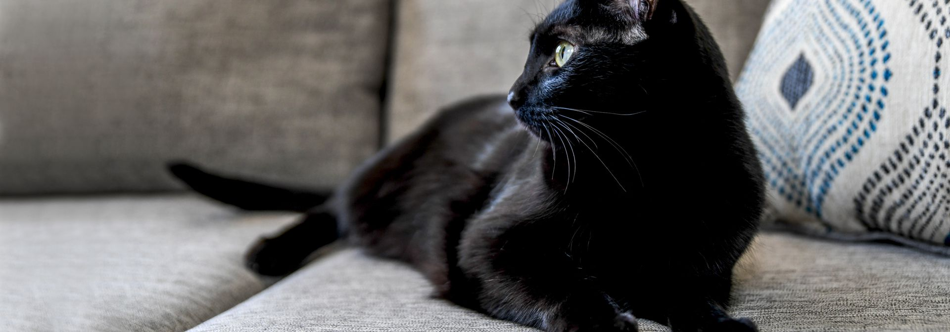 A black cat sitting on a couch