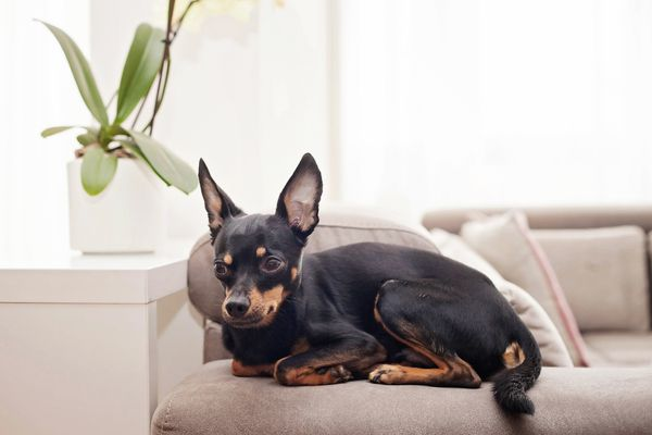 dog sitting next to a plant