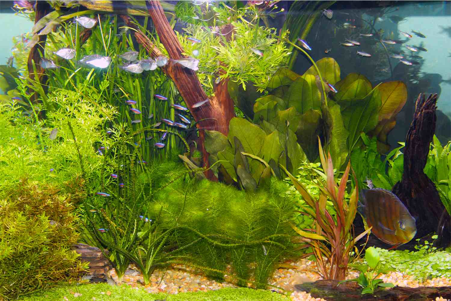 Live Plants And Lighting In Aquariums