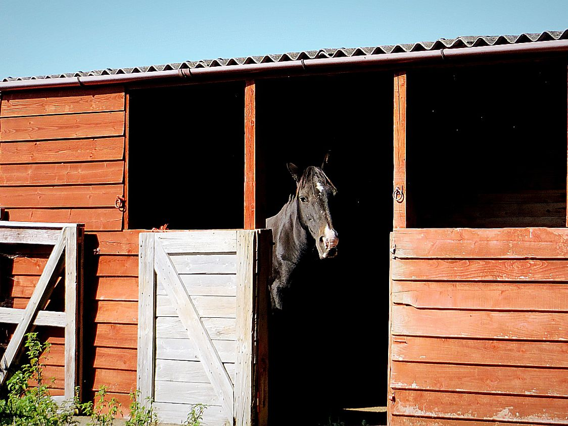 Designing Run In Sheds For Horses