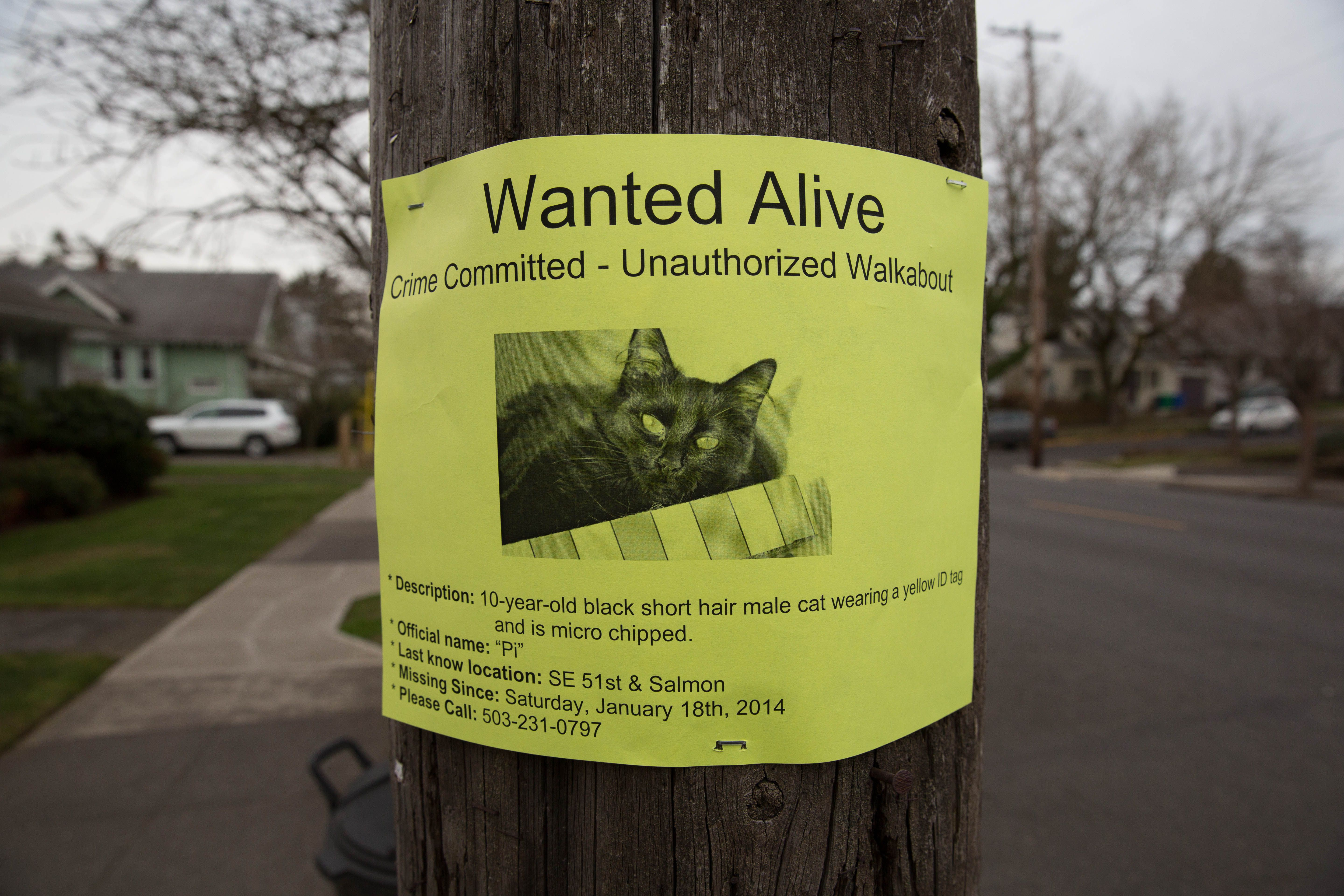 Lost cat poster on telephone pole