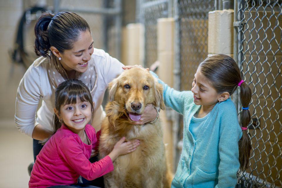 Perro de visita familiar para adopción