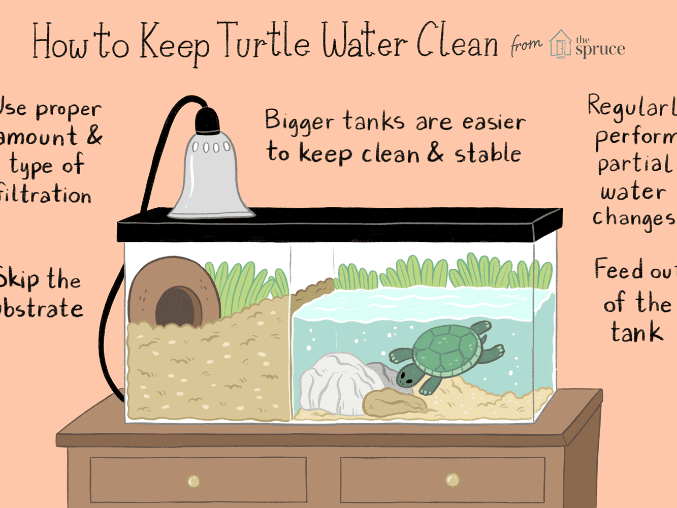 Why Your Pet Turtle Needs Clean Tank Water