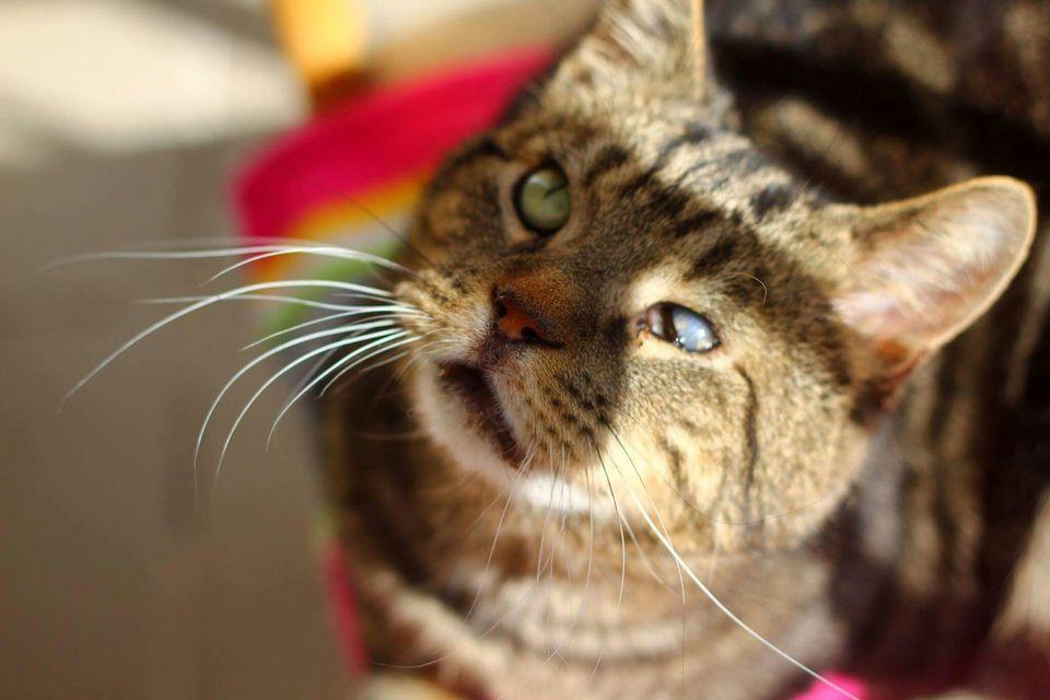 Retrato de primer plano de gato