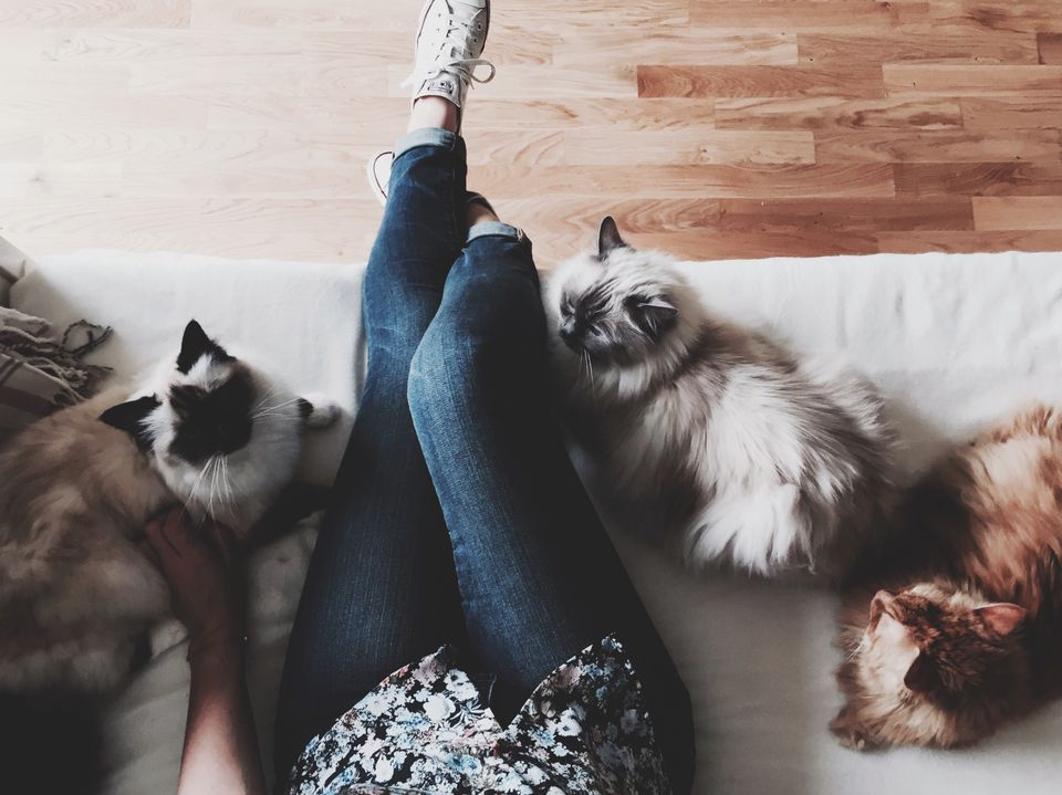Person and cats lounging on couch