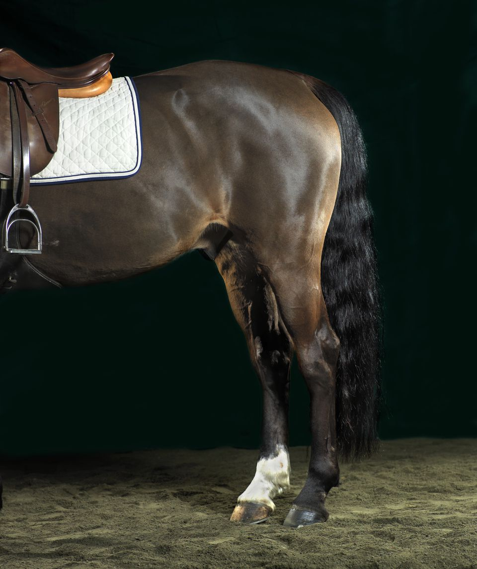 Hindquarters of bay horse wearing an English saddle.