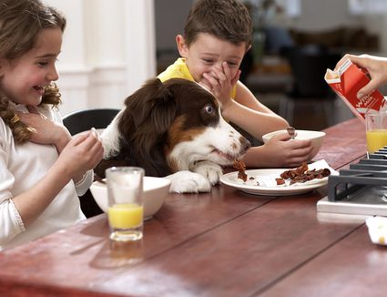 Home Remedies For A Dog Who Ate Chocolate