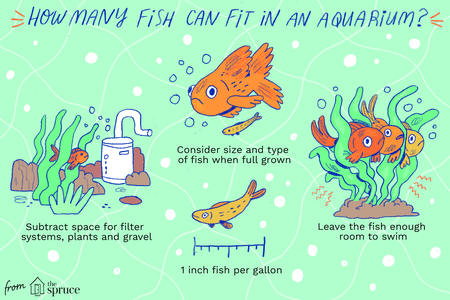 Safe Stocking Guidelines for Aquariums