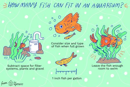 how many fish should go in your aquarium