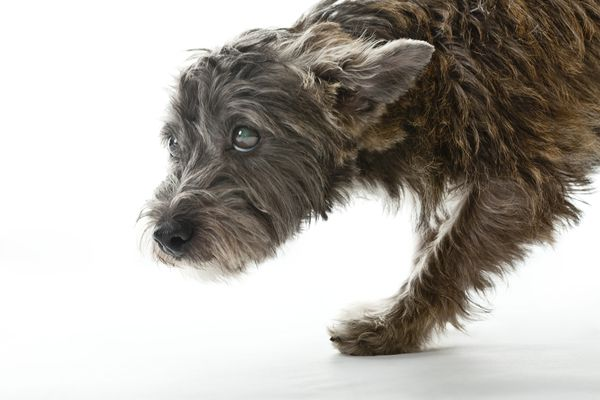 Small mixed-breed dog, looking worried