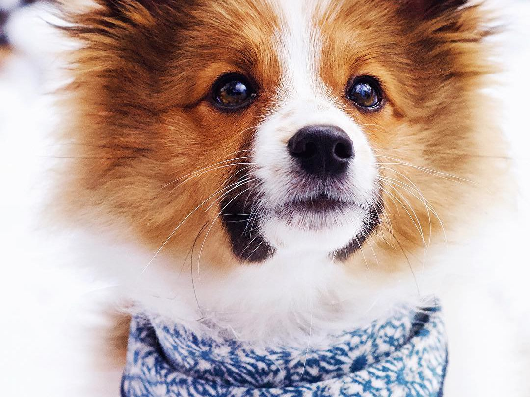 25 Of The Cutest Puppies We Ve Ever Seen
