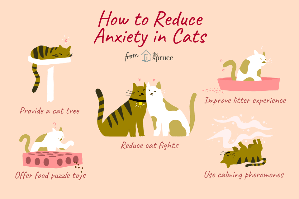 how to reduce anxiety in cats