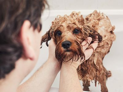 How Can I Help My Itchy Dog?
