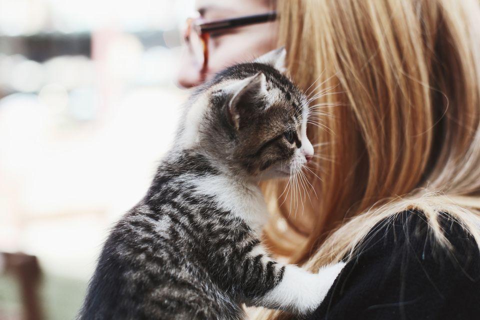 gato jugando con el pelo de los dueños