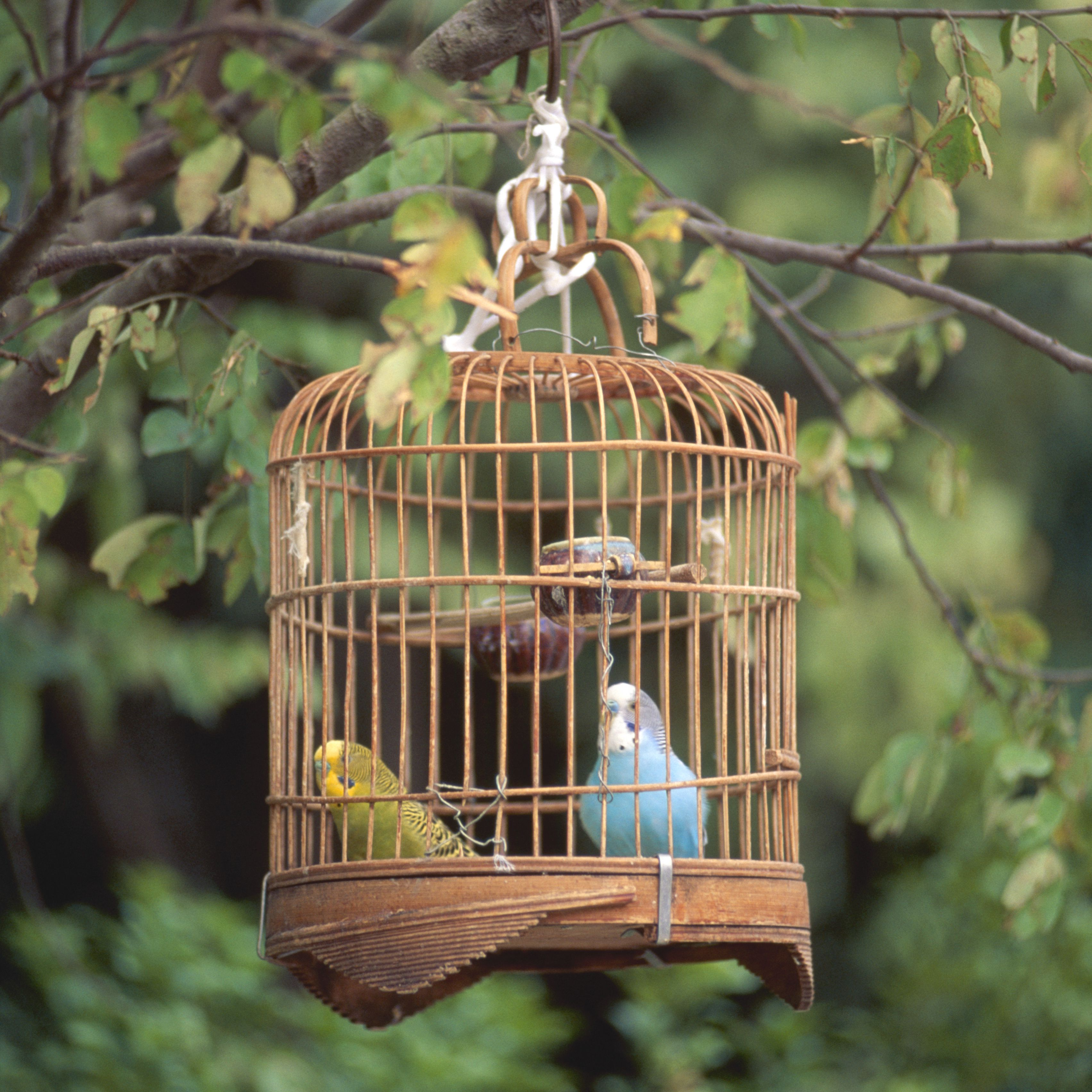 know the risks before you diy a bird cage. Black Bedroom Furniture Sets. Home Design Ideas