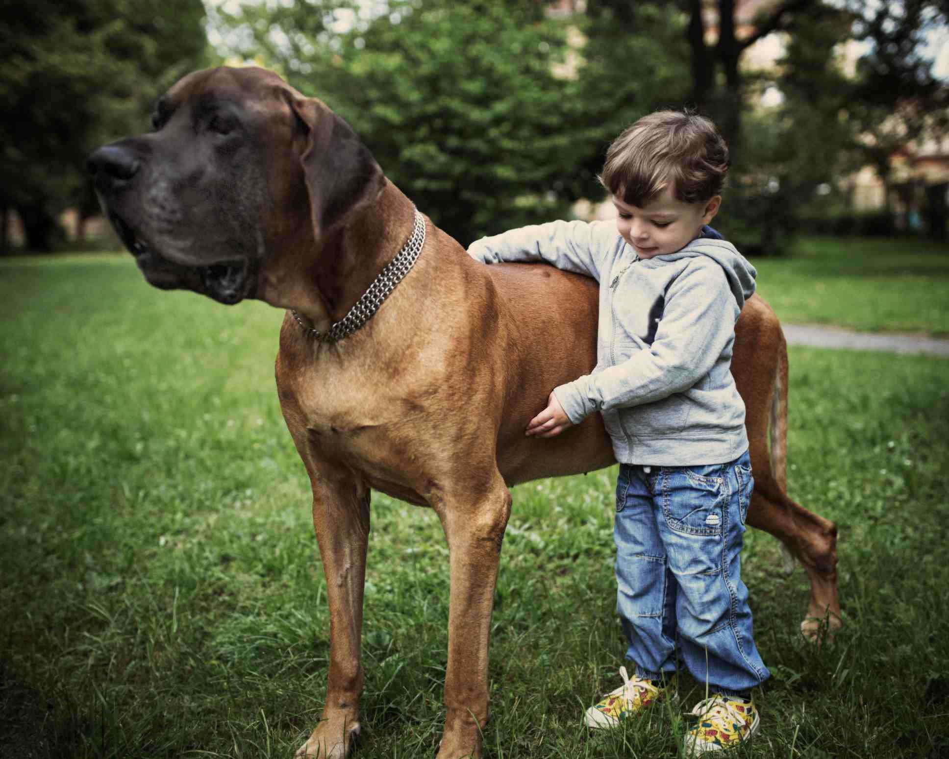 Young boy and great dane