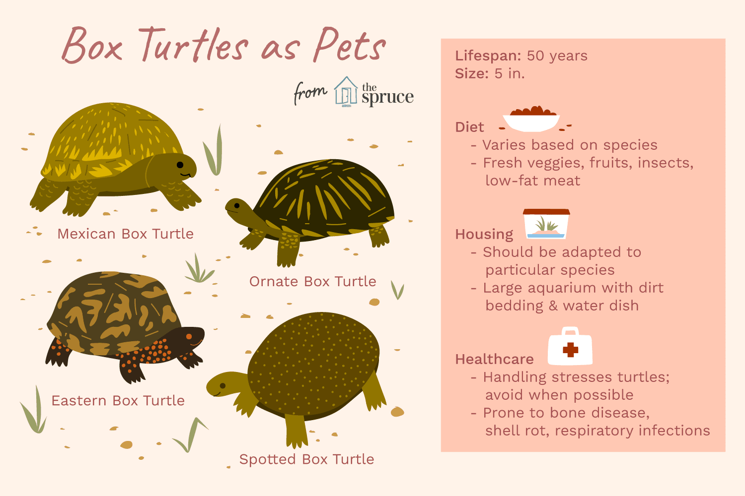 A Guide To Caring For Common Box Turtles As Pets