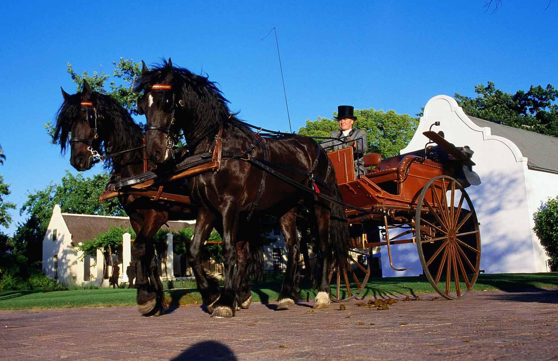 Carro y equipo de caballos frisones