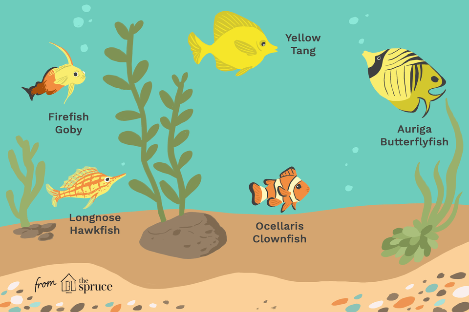 Ilustración de peces de agua salada