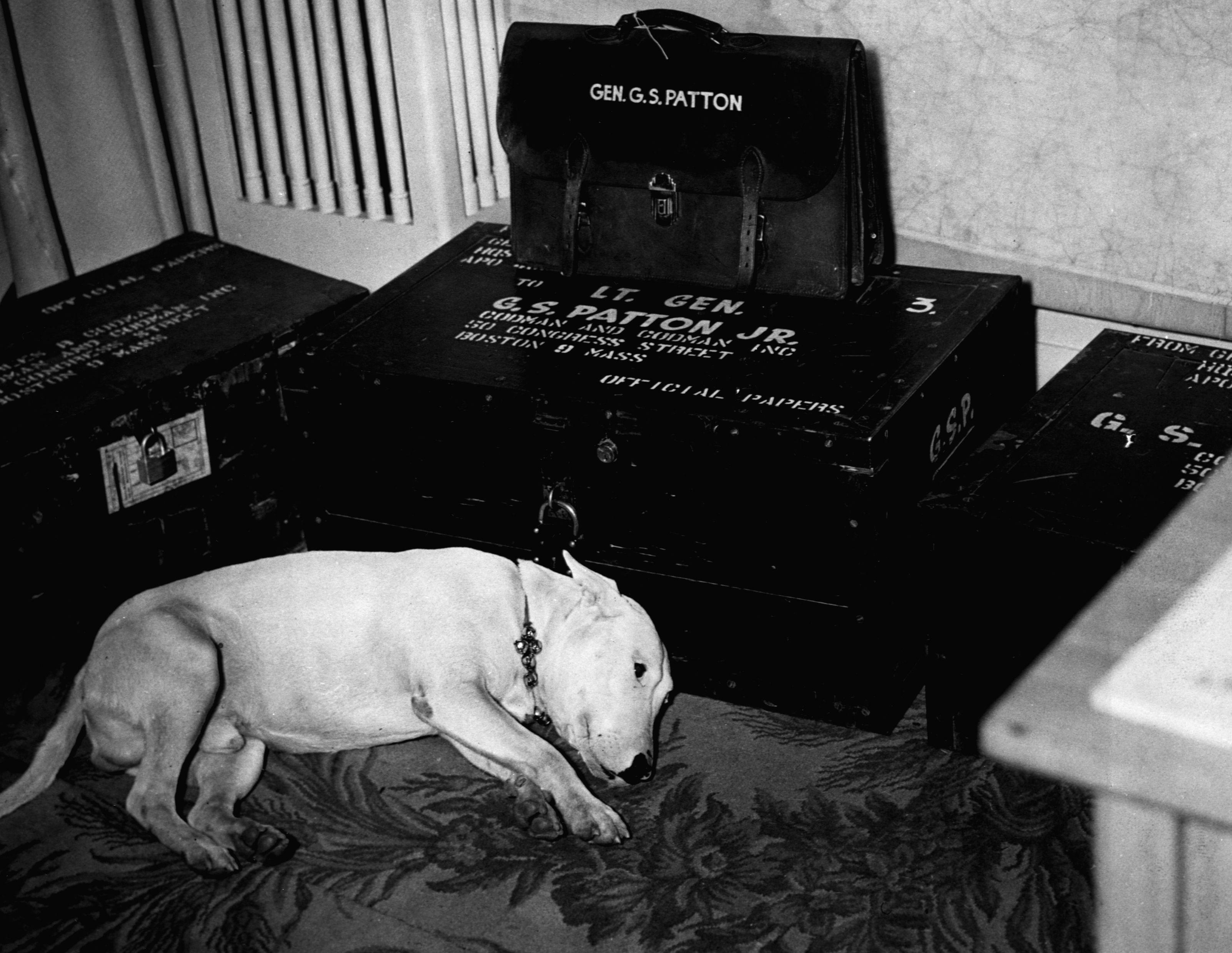 General Patton's Dog, Willie.