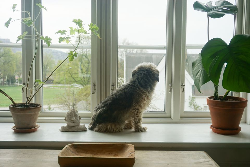 Dog looking out windown next to houseplants.