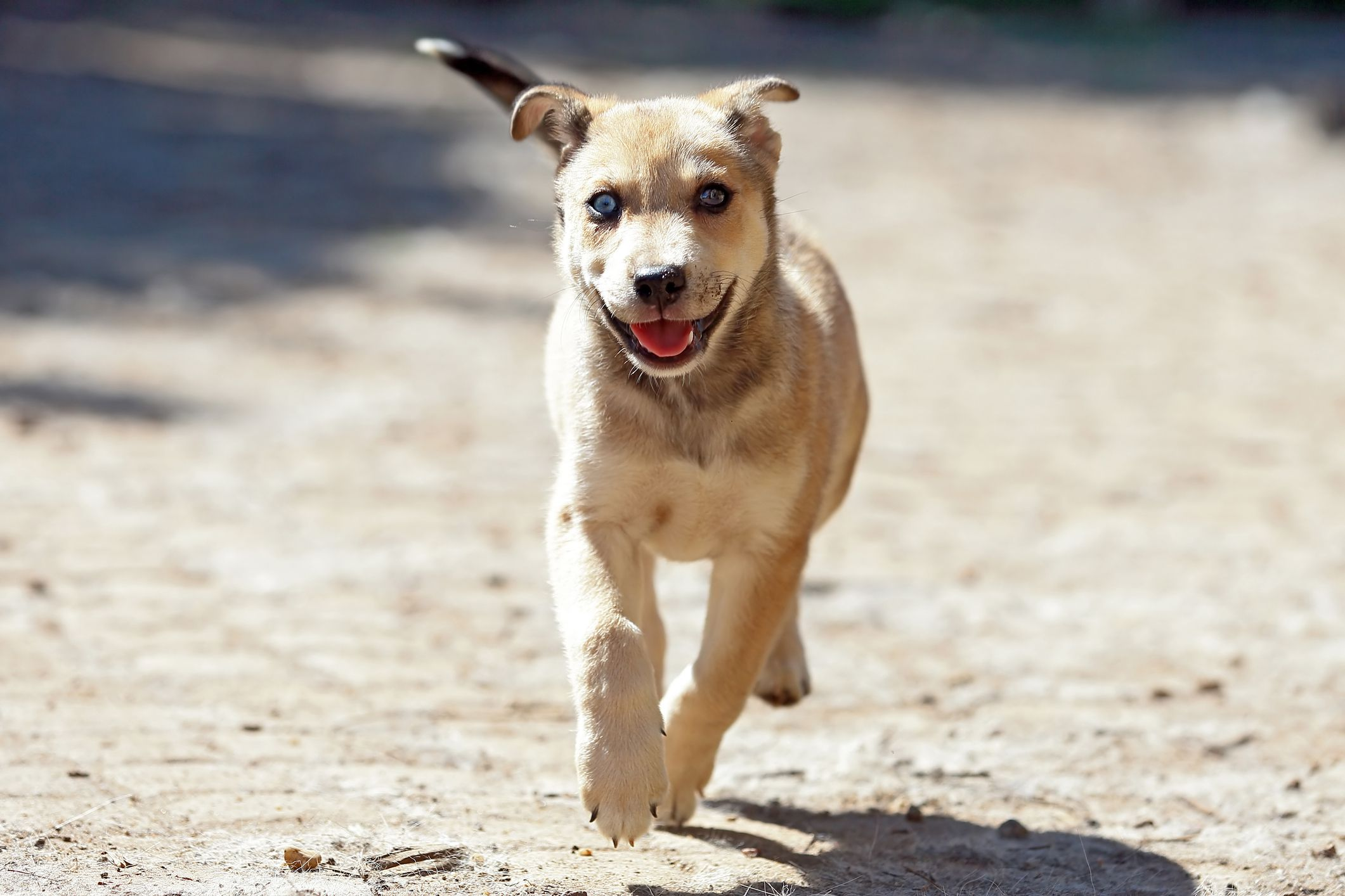 These 12 Dog Breeds Are Considered the Healthiest