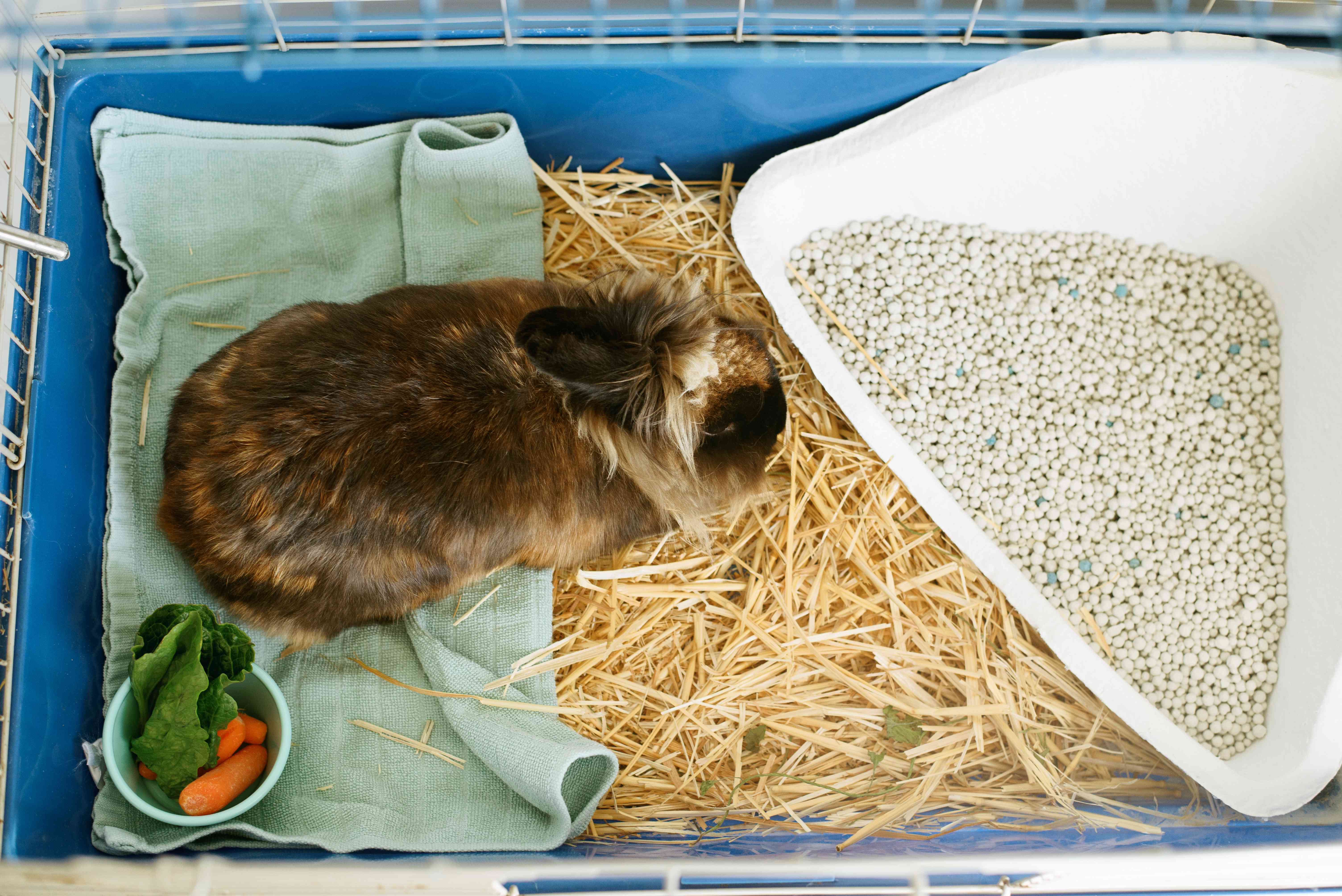 Brown and tan rabbit in cage in between litter pan and small bowl of carrots and lettuce