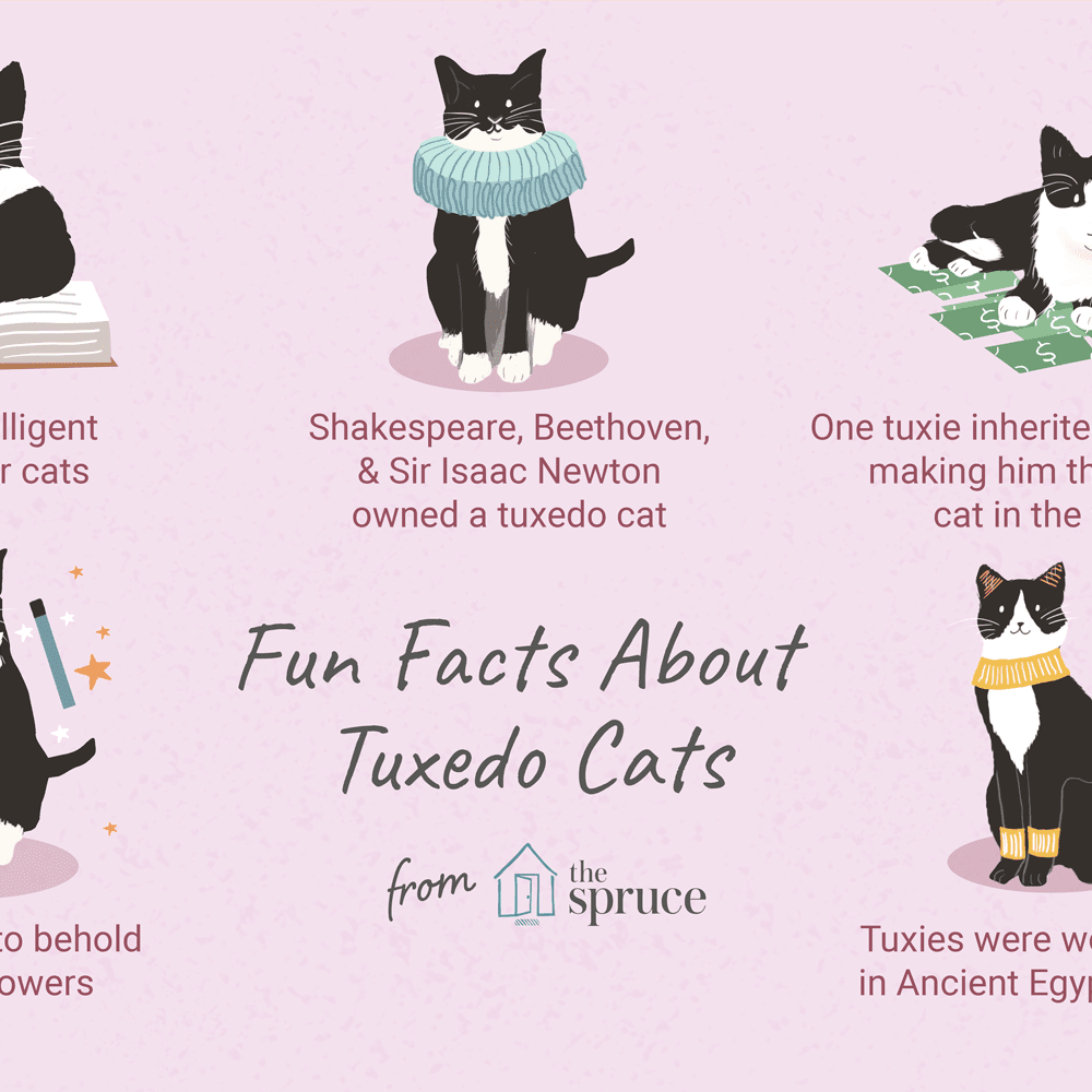 8 Fun Facts About Tuxedo Cats