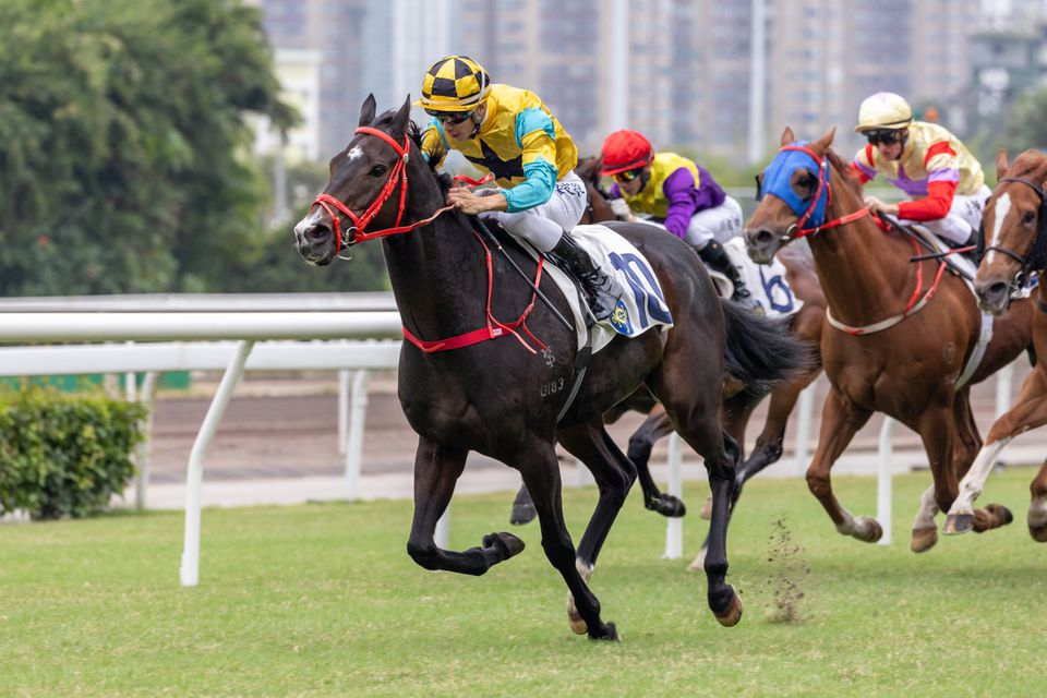 Horse Racing in Hong Kong - Sha Tin Racecourse