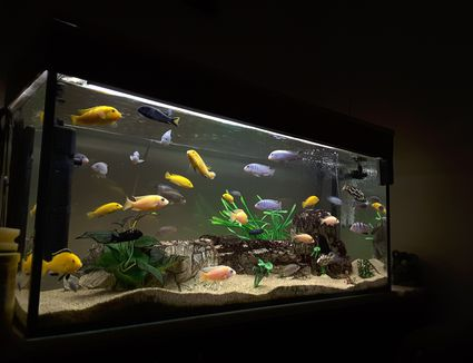 How To Lower High Water Temperature In Aquariums