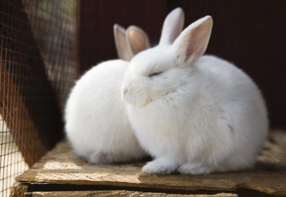 Soft Furry Rabbits