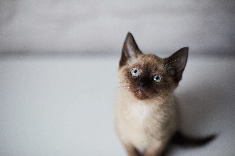 Kitten sat down
