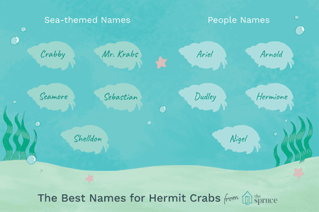 Fun Names for Pet Hermit and Fiddler Crabs