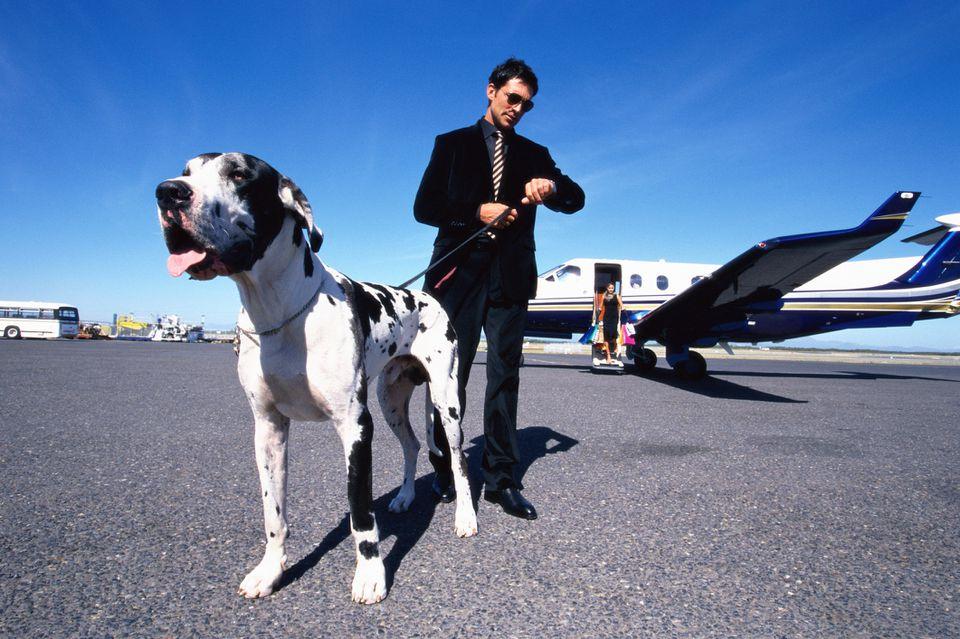 Dog departing airplane