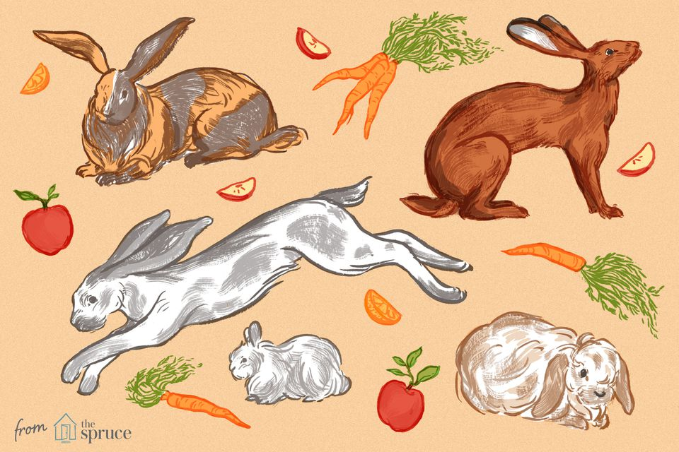 rabbit breeds illustration