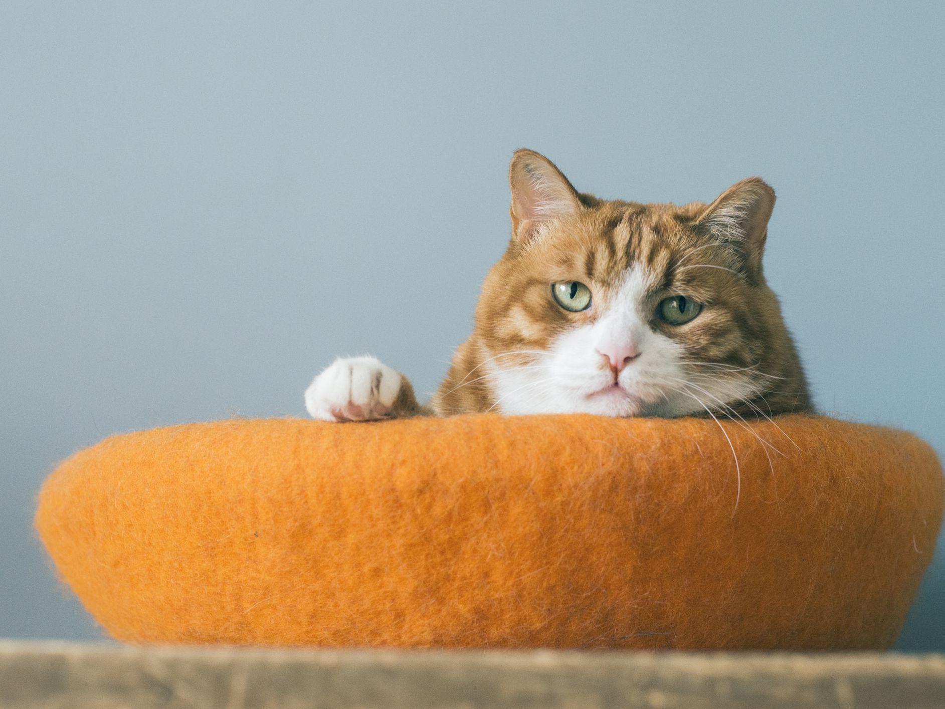 19 Orange Cat Names