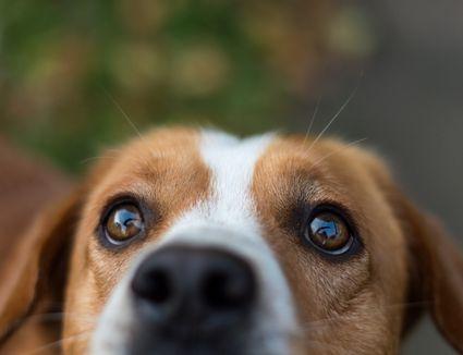 Close-up of dog's face